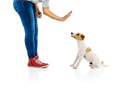 Habilitációs kutya kiképzője