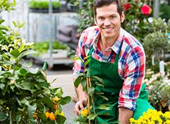Faiskolai kertész